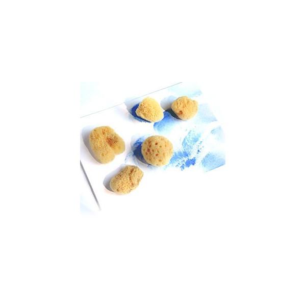 Mini-éponges naturelles